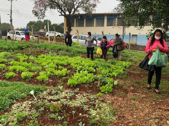 Horta comunitária coletiva responde a desafio de novos tempos